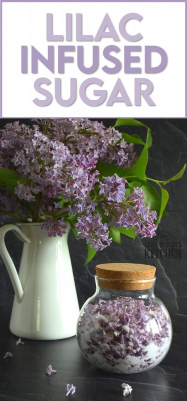 Lilac Infused Sugar is one of those things you didn't know you needed until you have it. Combine the two and watch the magic happen! Over the course of a few days, the sugar strips the lilac petals of all their moisture and scent. The sugar can then be used anywhere sugar is used! #lilac #infused #sugar #lilacsugar #lilacrecipes #infusedsugar